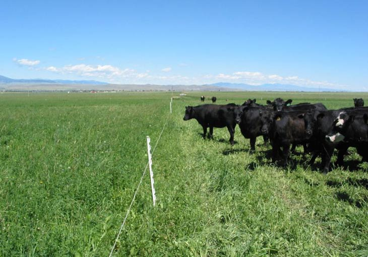Rotational Grazing Systems, Benefits & how Technology can Help
