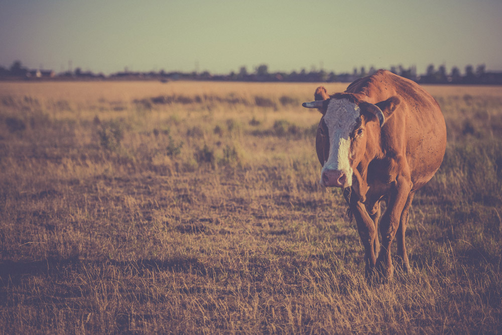 Grazing management strategies to cope with drought conditions