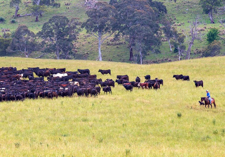 5 Farm Management Strategies to Take Control of Your Grazing Business