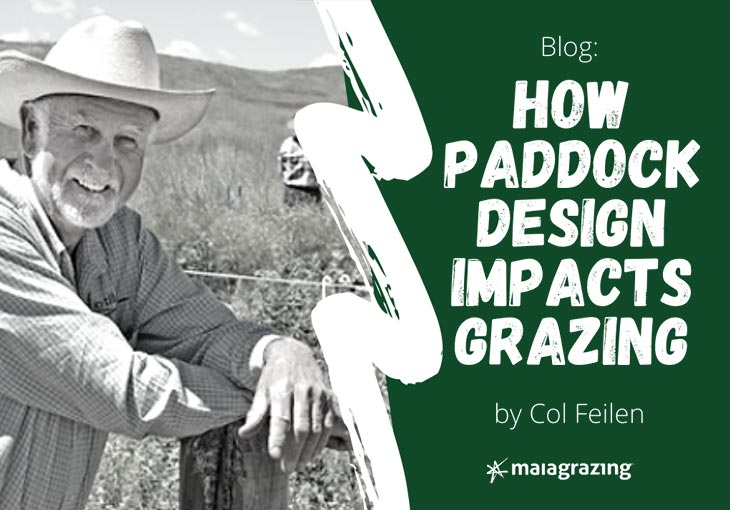 How Paddock Design Impacts Grazing